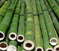 bamboo poles - properly harvested raw materials for your next project