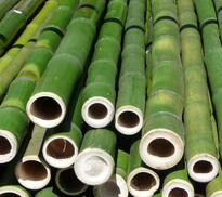 bamboo poles - all sorts of diameters and varieties